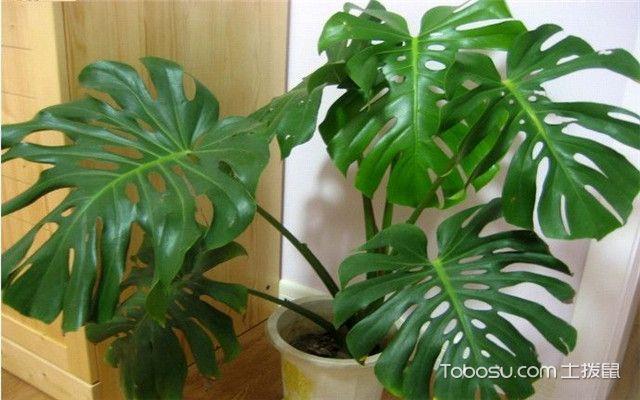 北欧风格和什么植物更搭
