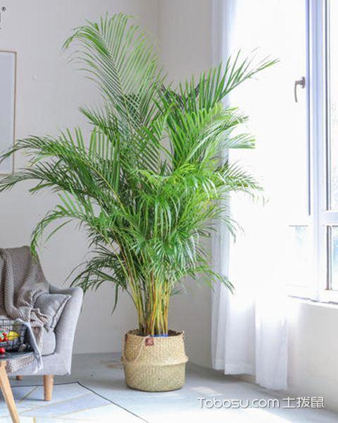 家里养哪些植物比较好