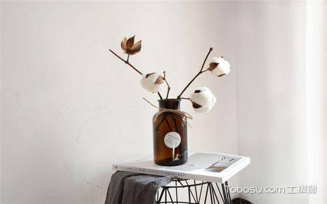有哪些绿植适合放在室内-棉花