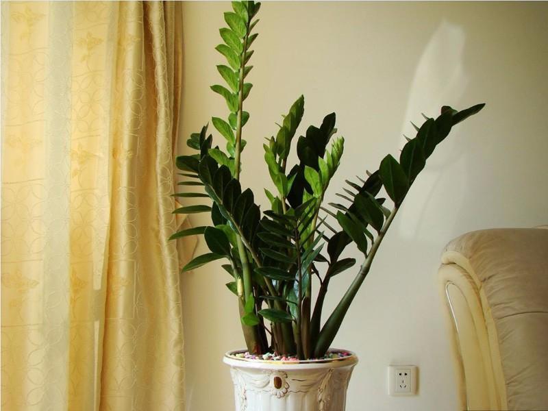 六款客厅植物风水摆放,为您开启旺财运
