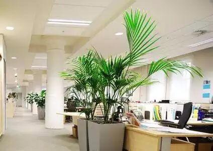 办公室植物摆件有哪些