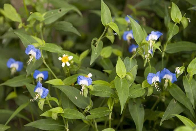 植物去甲醛,新家装修必备的几朵花