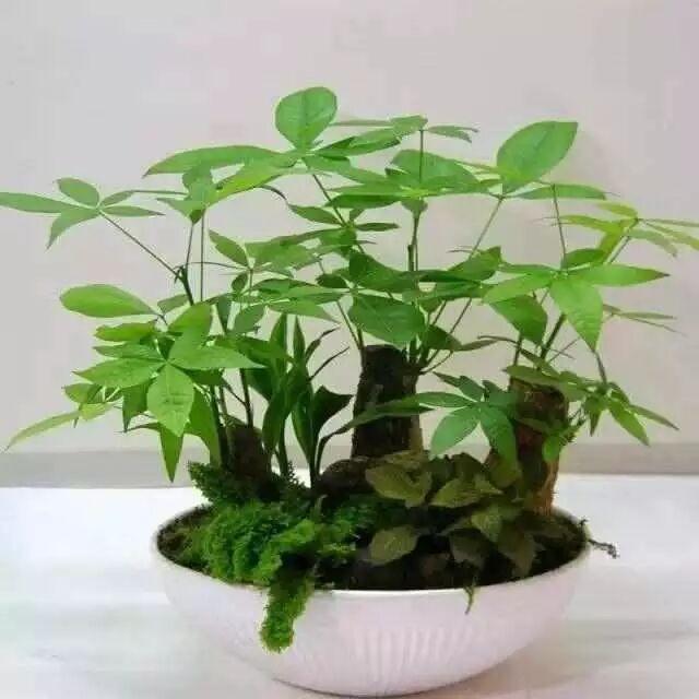 客厅放什么植物才能财源滚滚