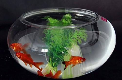 小鱼缸适合养什么鱼 鱼缸怎么换水