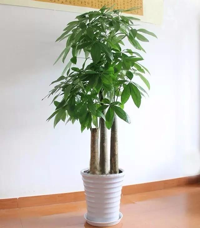 美化我们家居生活的效果摆放绿色植物要得法