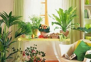 植物摆放风水禁忌,一定要知道
